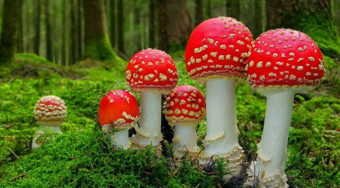 Velké říjnové houbaření v Brdech